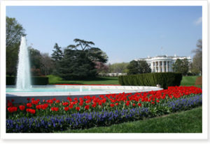 Top Ten Ways to Green The White House, Inside and Out - See more at: http://blog.biggreenpurse.com/biggreenpurse/2008/12/top-ten-ways-to-green-the-white-house-inside-and-out.